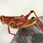 昆虫のミッシングリンク